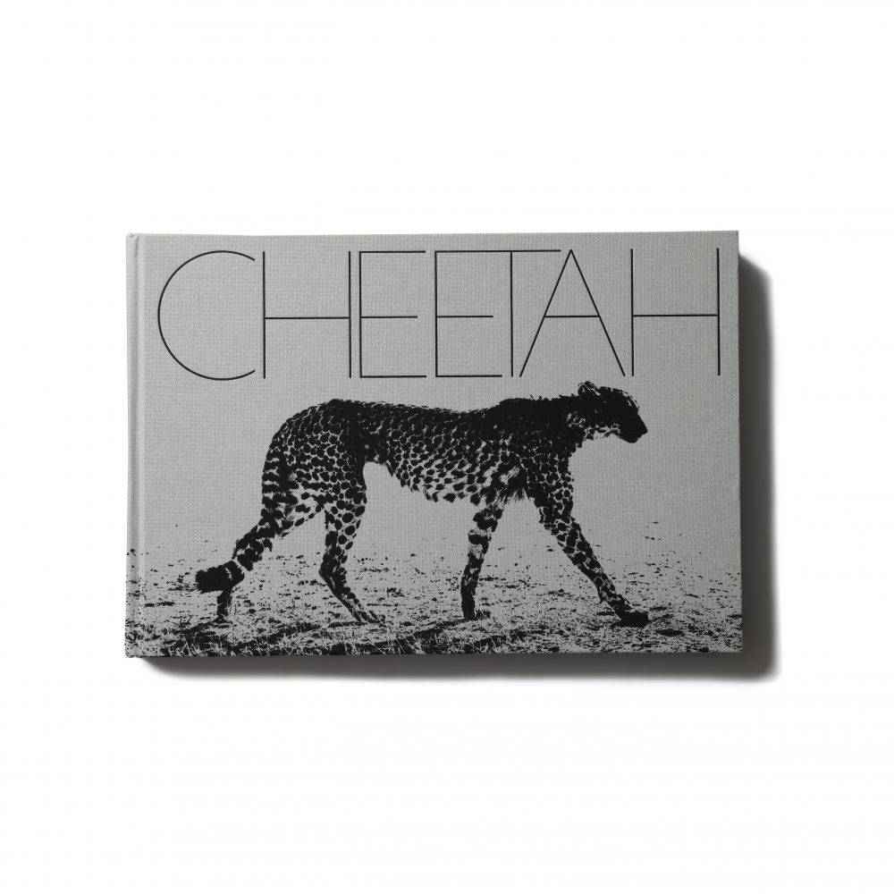 Mark Segal: Cheetah – Mark Segal